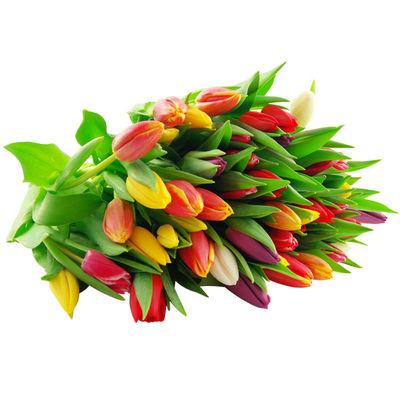 blumenstrau 10 bunte tulpen im bund von bluvesa auf. Black Bedroom Furniture Sets. Home Design Ideas