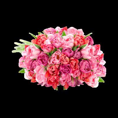 blumenstrau 40 rosafarbene gef llte tulpen von blume2000. Black Bedroom Furniture Sets. Home Design Ideas