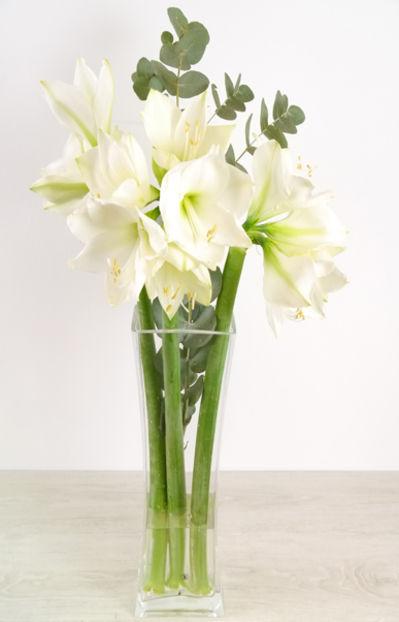 Blumenstrauß 5 weiße Amaryllis Montblanc von Duftgemüse auf Blumen.de