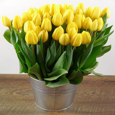 blumenstrau 50 gelbe tulpen von duftgem se auf. Black Bedroom Furniture Sets. Home Design Ideas