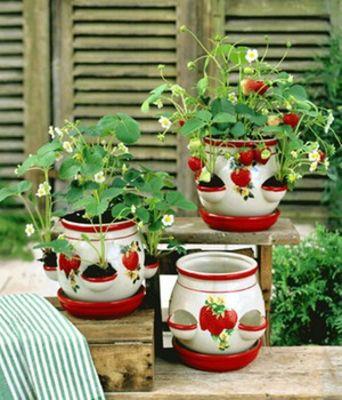Casa louise erdbeere von baldur garten auf kaufen for Garten pool komplett set