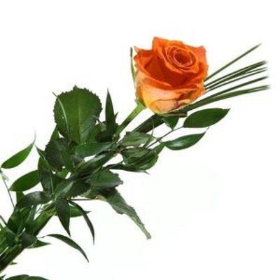 blumenstrau einzelne rose orange von florito flowerpost. Black Bedroom Furniture Sets. Home Design Ideas