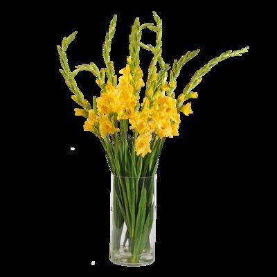 Blumenstrauß Gelbe Gladiolen von Blume2000.de auf Blumen.de
