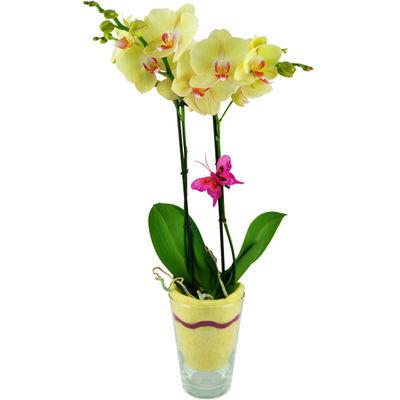 gelbe orchidee im glas von bluvesa auf kaufen. Black Bedroom Furniture Sets. Home Design Ideas