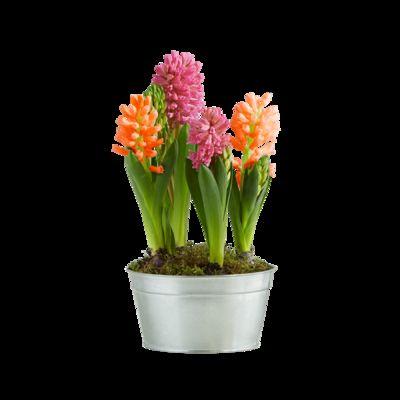 Hyazinthen-Schale von Blume2000.de auf Blumen.de kaufen