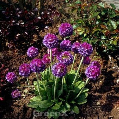 Blau f/ür Pflanzen Spikes Blumentopf Bew/äSserung Bew/äSserung Set Wasserkugel Urlaub Bew/äSserung Blumen Haorw Bew/ässerungskugeln f/ür Pflanzen 3 St/ück
