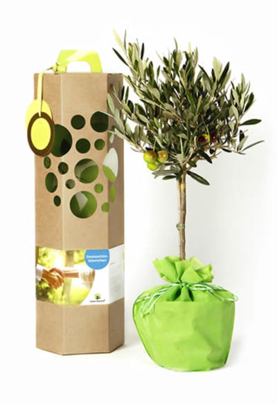 olivenbaum als dankesch n geschenk von schenkeinb umchen. Black Bedroom Furniture Sets. Home Design Ideas