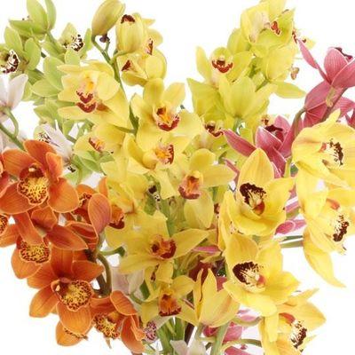 blumenstrau orchideen rispen von blumenfee auf. Black Bedroom Furniture Sets. Home Design Ideas