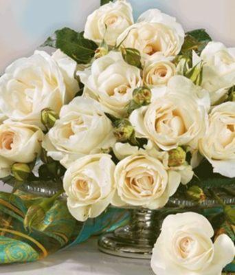 parfum rose grand nord von baldur garten auf