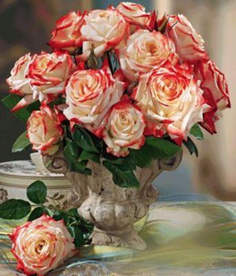 parfum rose imp ratrice farah von baldur garten auf. Black Bedroom Furniture Sets. Home Design Ideas