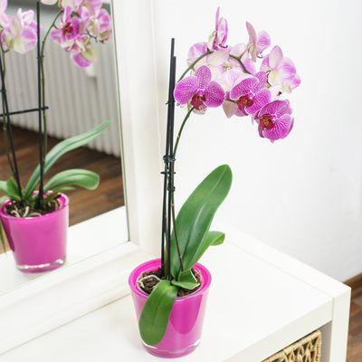 Blumenstrauss Pinke Orchidee Im Ubertopf Von Blume Ideal Auf Blumen De