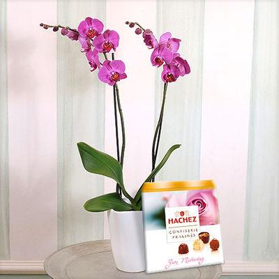 pinkfarbene orchidee im bertopf mit hachez muttertagspralinen von auf kaufen. Black Bedroom Furniture Sets. Home Design Ideas