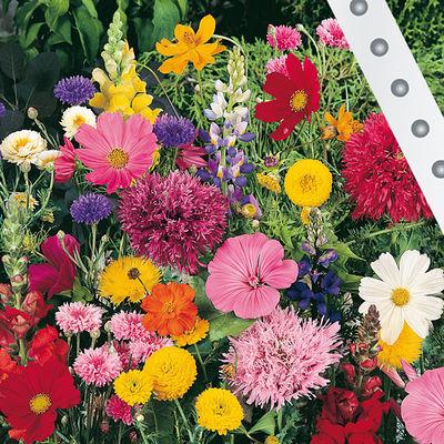 Blumen f r garten online kaufen kreative ideen f r for Wo pflanzen bestellen