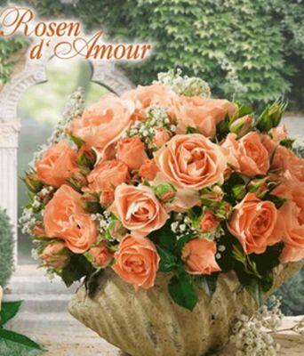 Baldur garten rosen  Rosen d´Amour ´Bouquet de Mariée®,´ von BALDUR-Garten auf Blumen ...