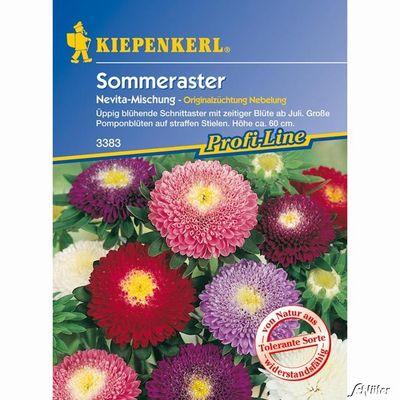 Aster günstig kaufen und bestellen auf Blumen.de