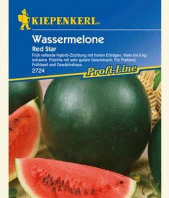 Wassermelone Pflanzen Kaufen : wassermelone red star f1 von baldur garten auf kaufen ~ Watch28wear.com Haus und Dekorationen