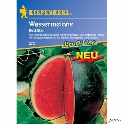 Wassermelone Pflanzen Kaufen : wassermelone red star von garten schl ter auf kaufen ~ Watch28wear.com Haus und Dekorationen