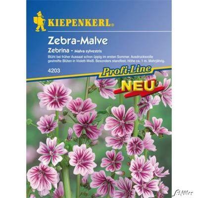 Malve günstig kaufen und bestellen auf Blumen.de