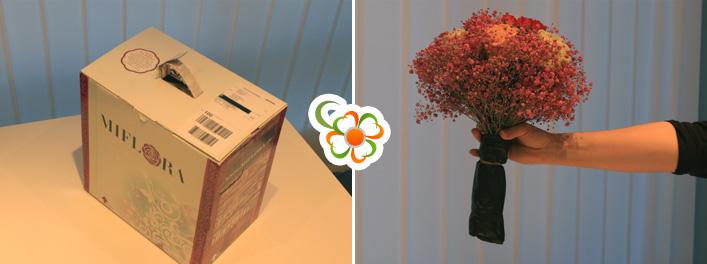 https://www.blumen.de/images/Blumenanbietertest%202015/Miflora/verpackung-miflora.jpg