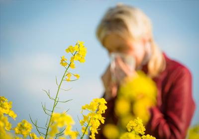 Blumen.de - Pflanzen Und Blumen Für Allergiker- Welche Sind ... Probleme Mit Den Pflanzen