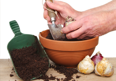 pflanzen f r katzen welche pflanzen sind geeignet welche giftig. Black Bedroom Furniture Sets. Home Design Ideas