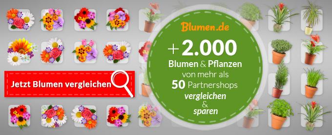 Wo Kann Ich Blumen Kaufen blumen de blumen und pflanzen günstig kaufen und verschicken